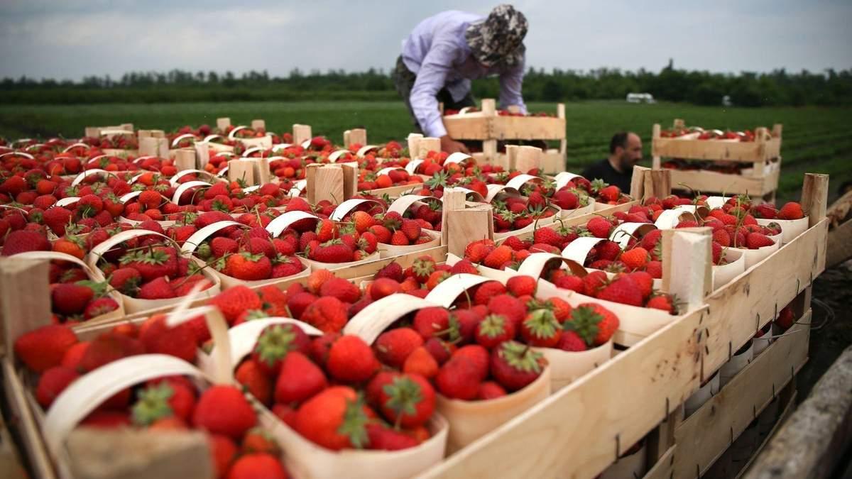 Як змінився попит на українських робітників з початку пандемії