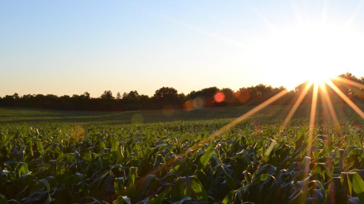 Вирощування овочевих культур у Польщі опинилося під загрозою через несприятливі погодні умови