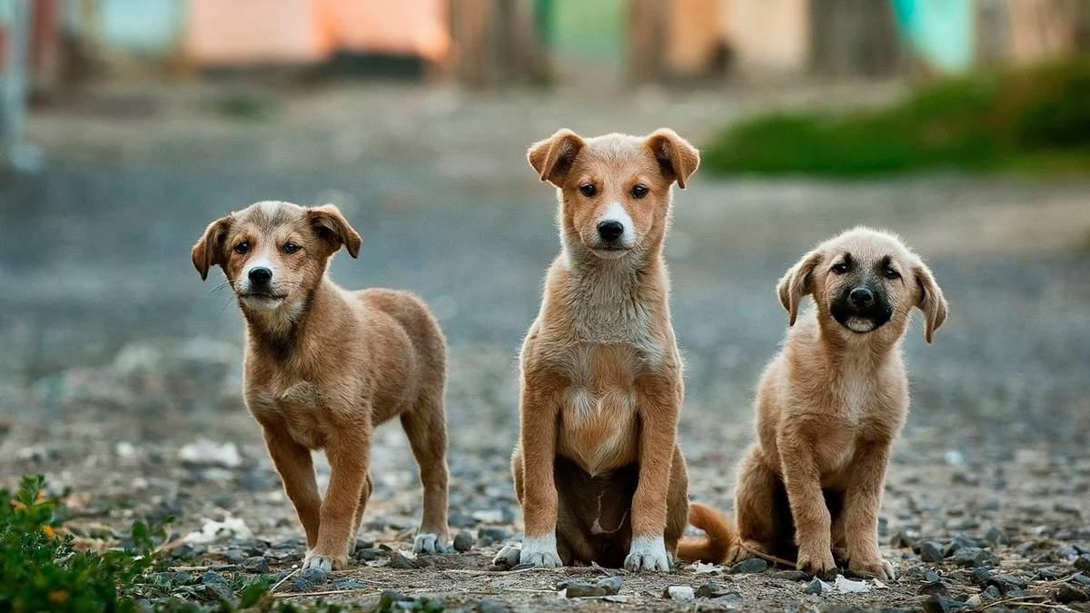 Вроцлавский приют для бездомных животных просит о помощи
