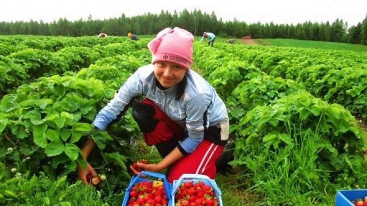 Коронавирус помог зарабатывать больше, – мигрантка рассказала о сезонных работах в Польше - Закордон