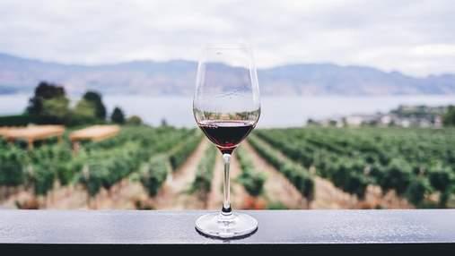 Освіта для гурманів: де в Європі можна отримати диплом винороба