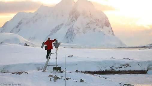Криоконсервирование и моржевание в галстуке: как биолог работает в Антарктике