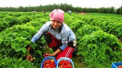 Коронавирус помог зарабатывать больше, – мигрантка рассказала о сезонных работах в Польше