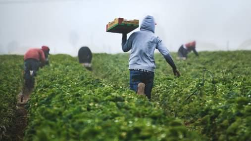 Якби не українські працівники, польський аграрний сектор збанкрутував би, – Василь Воскобойник